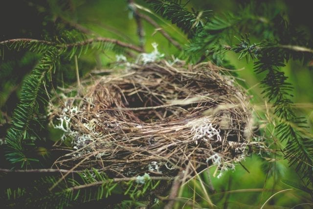 What is Empty Nest Syndrome?